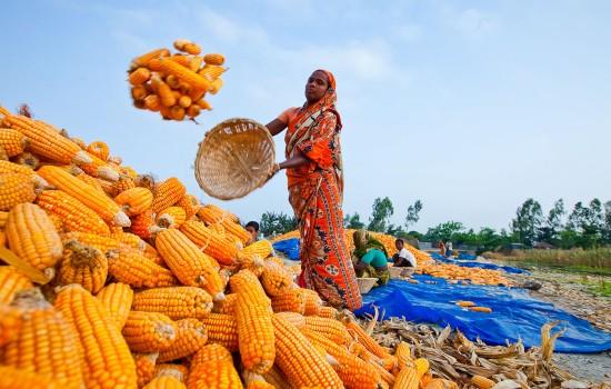 bangladesh-148-132