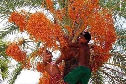 bangladesh- (38)