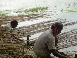 bangladesh- (238)