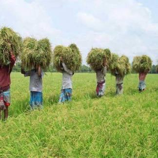 bangladesh- (240)